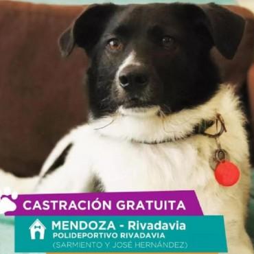 Castraciones gratuitas en le Polideprotivo de Rivadavia