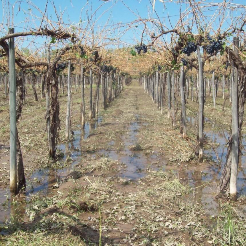 La Paz fue incluida dentro del estado de emergencia agropecuaria