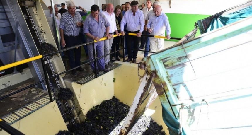 El nuevo establecimiento vitivinícola Raíces de Junín realizo su primera molienda oficial