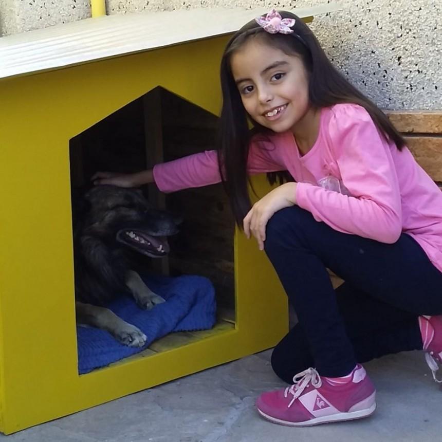 La entrañable historia de Peluche, un perro que ha sido adoptado durante la cuarentena