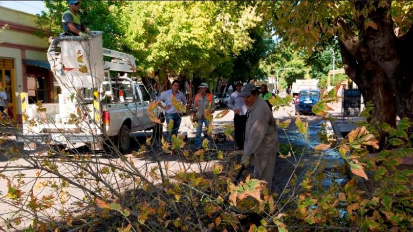 Junín comenzó la temporada de poda y erradicación de forestales