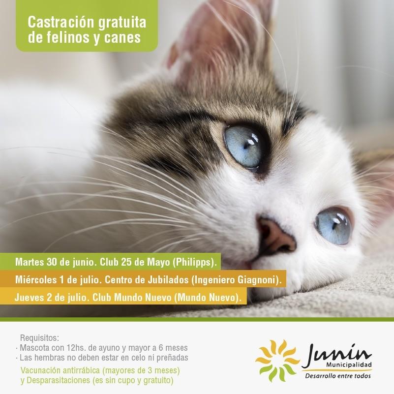 Junín llevará a cabo su habitual cronograma de castraciones para felinos y canes