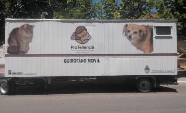Se aplicará en La Paz el programa de tenencia responsaabe y salud de perros y gatos